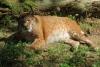 Öffentliche Führung im Opel-Zoo am Samstag, 8. Oktober um 15 Uhr