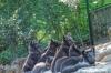 Jubiläums-Aktionen im Opel-Zoo